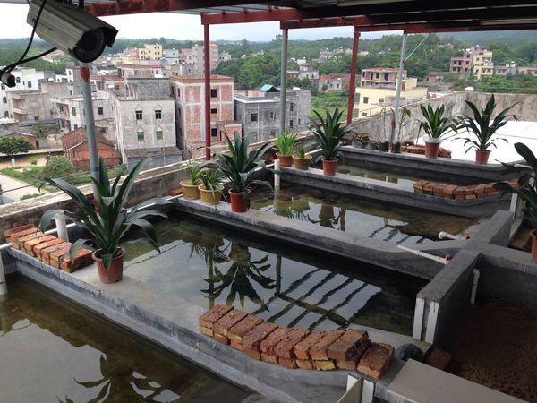 房屋建养石金钱龟池宽6米阳台设计图图片