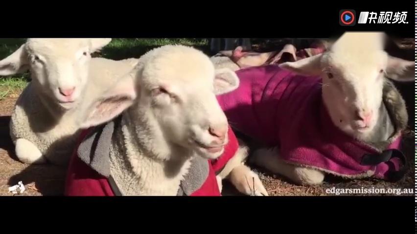 公益短片:可爱的动物朋友