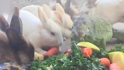 一群小动物吃货聚在一起,蜥蜴乌龟兔子大聚餐