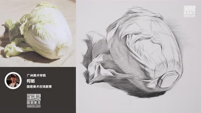 国君美术 几何体结构素描 单体 白菜 柯略