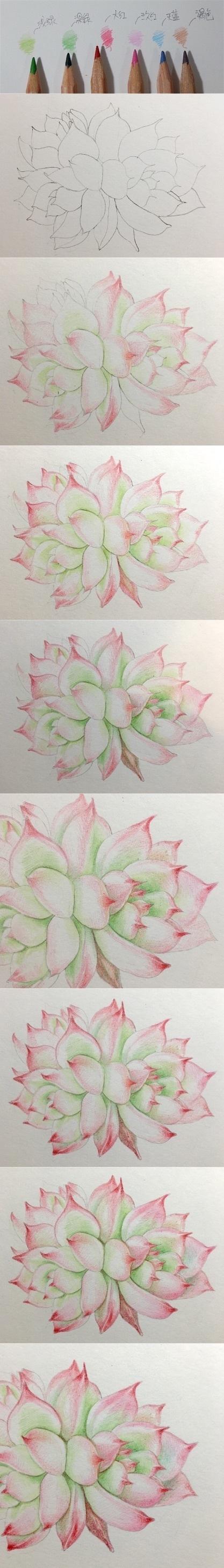 多肉植物彩铅怎么画