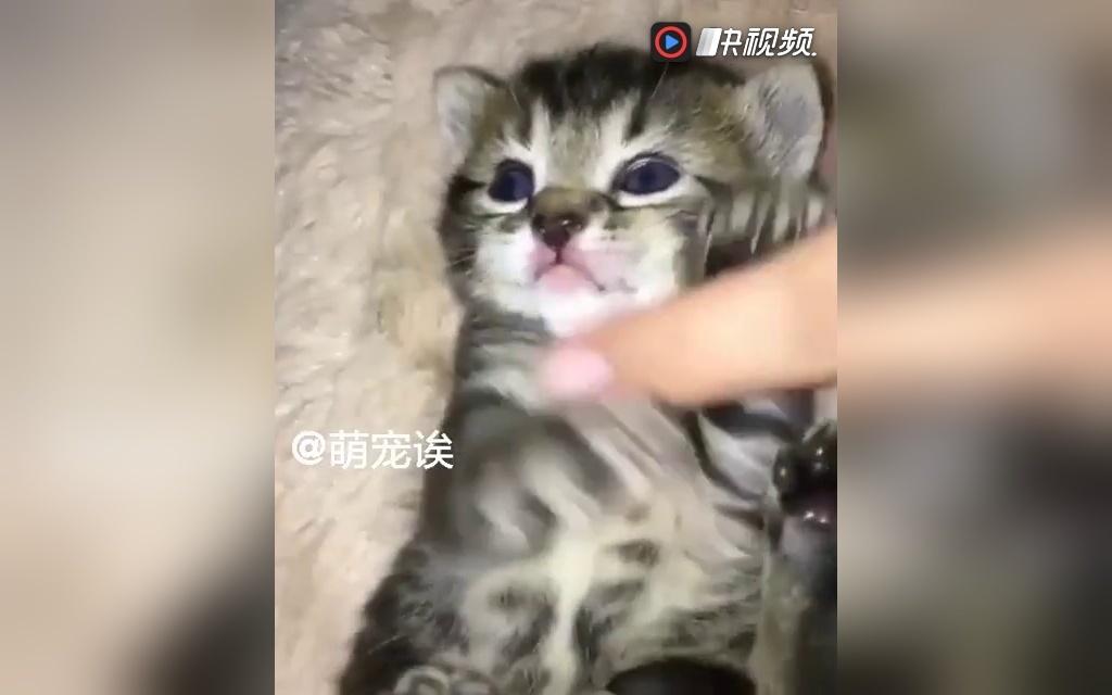 小小喵星人 猫咪 萌宠 萌萌哒 可爱 宠物搞笑视频 蠢萌 可爱