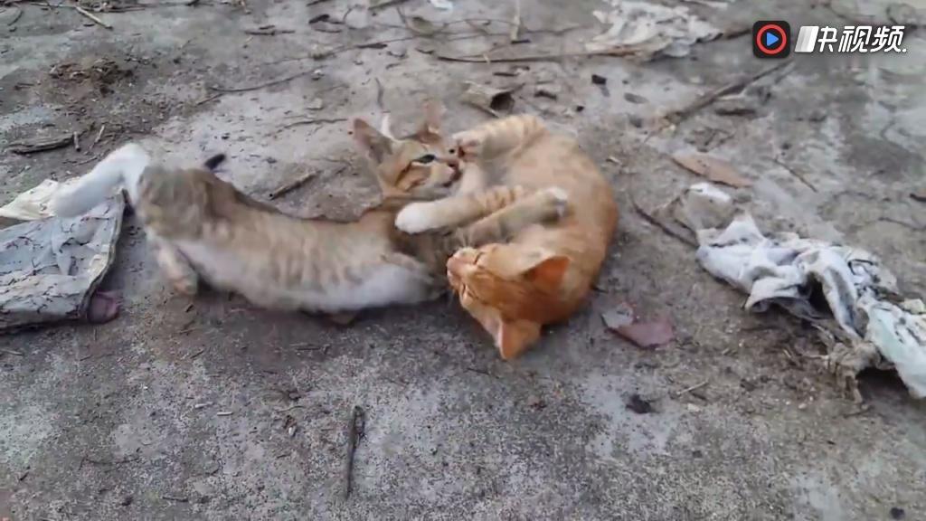 轻松时刻加菲猫家有萌宠欢乐多 萌宠日常动物搞笑可爱的动物呆萌卖萌