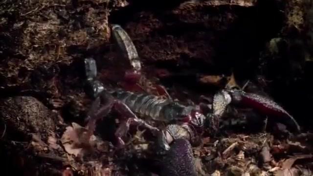 蜈蚣大战蝎子,三十秒被全身盔甲分尸