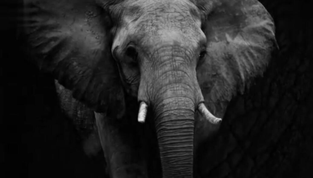 野生动物救援公益广告:大象篇