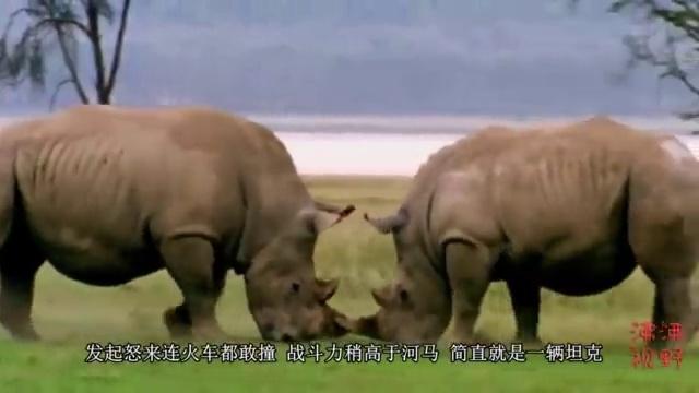 视频-动物世界中猛兽的战斗力排行榜:老虎排第五,第一名你不得不服!