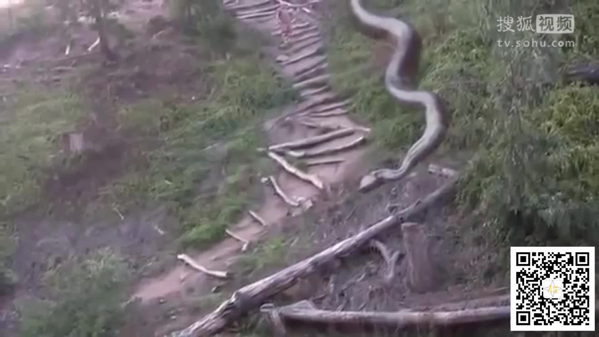 世界最大蛇?目测五十余米巨蛇横卧道旁吓坏路人