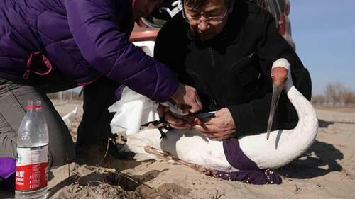 白鹤捕抓工具图片