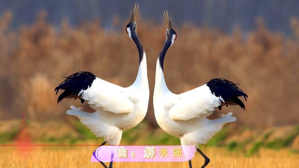 朱哲琴《丹顶鹤的故事》;荣获青歌赛的亚军