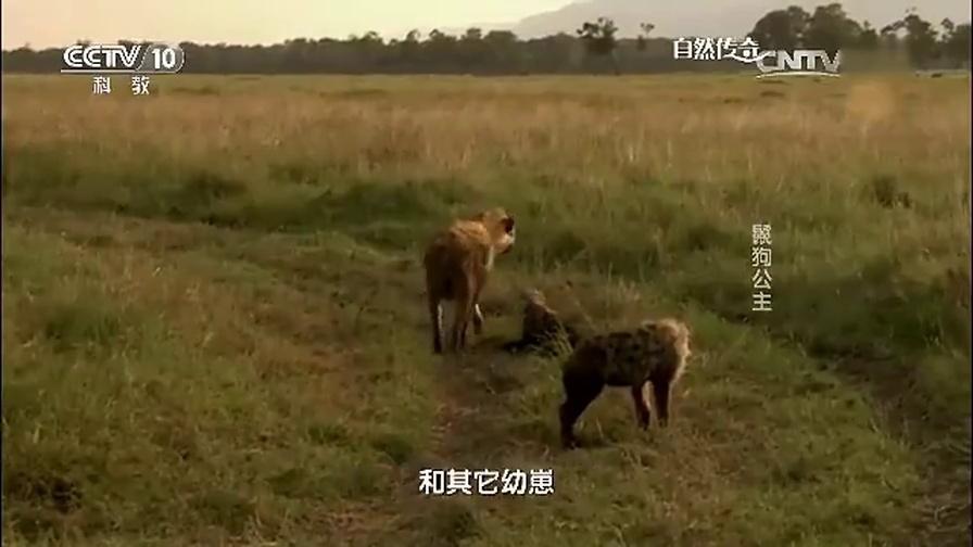 自然传奇动物世界,精彩片段