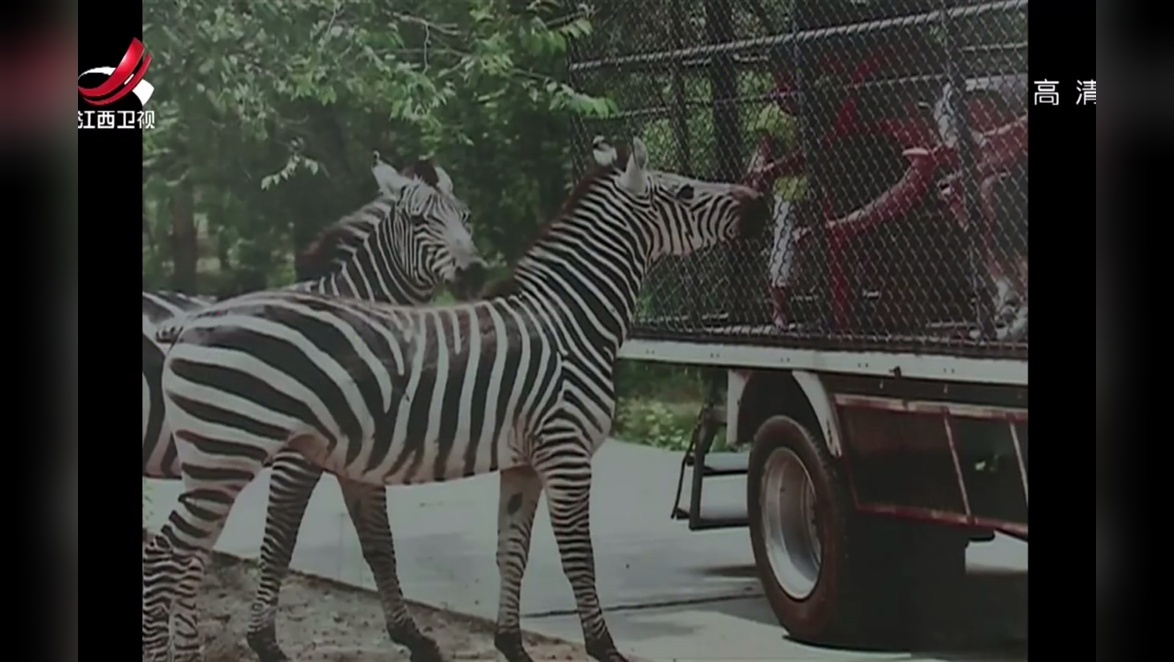 抚州临川区仙盖山野生动物园全面开建 新闻夜航