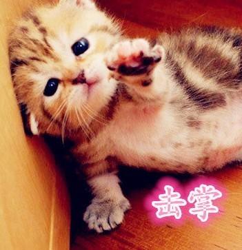 求一张一个表情击掌的表情,带击掌图片字,要微信群聊动物大全两个搞笑
