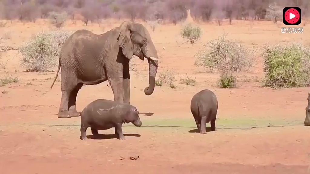 残酷的动物世界 豹子蟒蛇血拼,大象 狮子老虎vs鳄鱼 绝对难得一见的