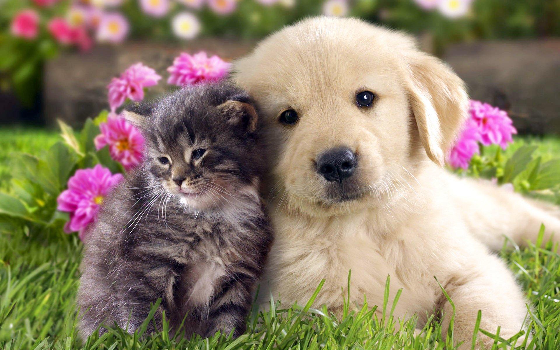 可爱小狗电脑壁纸_可爱狗狗壁纸高清图片_超萌狗狗壁纸 - 随意贴