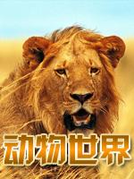 动物世界 2012年