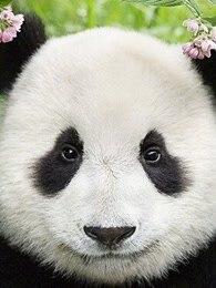 BBC:无比可爱的动物