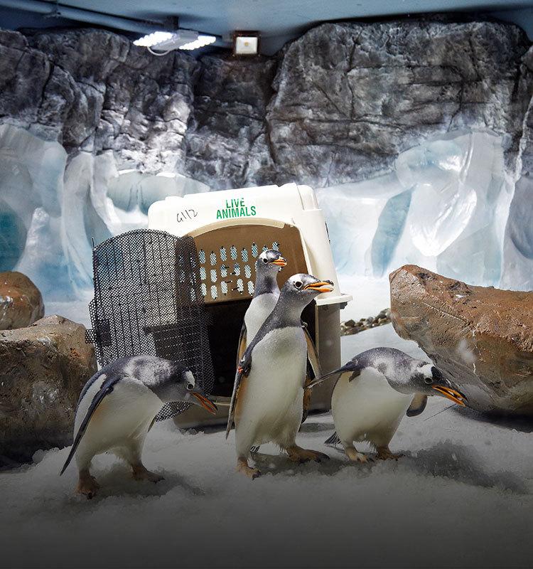 飞机上的企鹅:动物大搬运