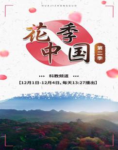 花季中国第二季