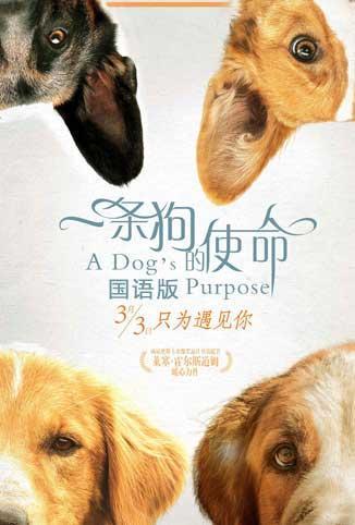 一条狗的使命[普通话]