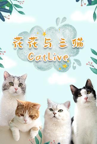 花花与三猫海报剧照