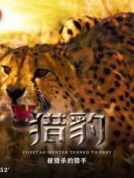 猎豹:被猎杀的猎手