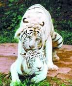 动物世界之爱的寓言