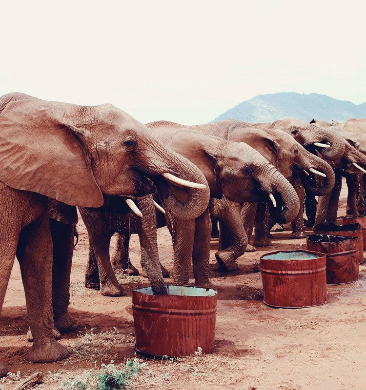大象日记 第二季