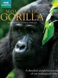 BBC:山地大猩猩