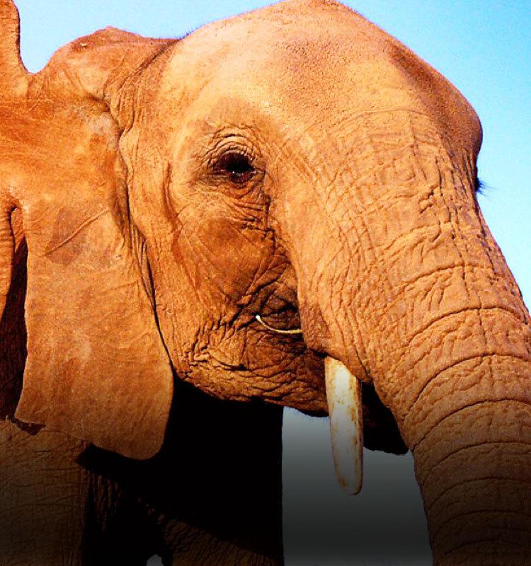 大象日记 第一季