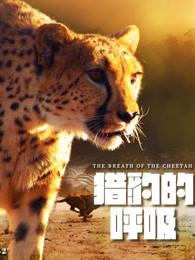 猎豹的呼吸第1集剧情