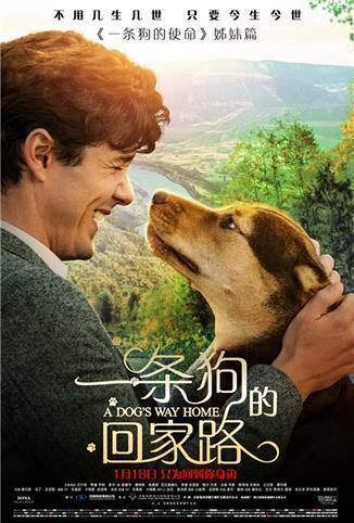 一条狗的回家路 普通话版
