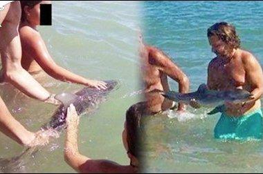 小海豚被困浅海 遭游客强制抚摸后死亡