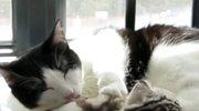猫咪不愿意打针疯狂抵抗