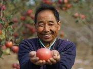 苹果什么时候吃更好?请牢记这3段时间,减肥不再是难事