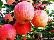 苹果什么时候吃最好答案竟是 现在知道还不晚!