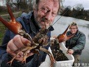 中国人到澳大利亚旅游, 买了8斤小龙虾, 看到账单时说: 是不是算错了