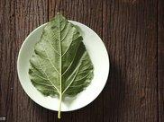 如何科学制作桑叶茶?
