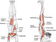 为什么瑜伽习练中总是强调张开脚趾?初学者看这篇就懂了!