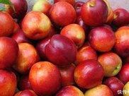 孕妇能吃油桃吗 推荐两个食谱给你