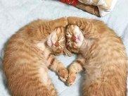 """橘猫一般都很胖,为什么呢?难道真有""""大橘为重""""的定律?"""