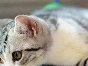 没有做过绝育的猫,过得怎么样?