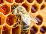 """空腹喝""""蜂蜜水""""可以减肥?有很多人却喝错了!专家教你喝蜂蜜!"""