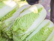 炒白菜的热量以及吃白菜是否能够减肥