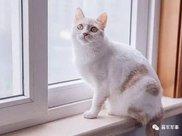 什么情况下猫咪要减肥,如何给猫减肥,又如何防止猫咪减肥反弹
