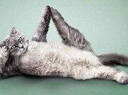 和宠物一起练瑜伽是什么体验
