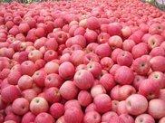 苹果和它一起煮,每天一碗,小肚子不见了,告别失眠,身材更苗条