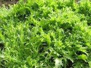 《蔬菜的种植技术》,蔬菜减压贮藏原理,以及贮藏的方法!