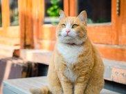 橘猫是个品种?它们的都很胖,那是你不知道的知识