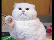网友把很胖的猫寄养在奶奶家,过半年再去看,脸又胖了整整一圈!