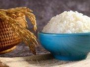 父母甘油三酯偏高,还能不能吃主食呢?听说不吃淀粉的饮食能降血脂?专家这么说